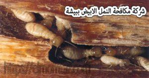 شركة مكافحة النمل الابيض ببيشه