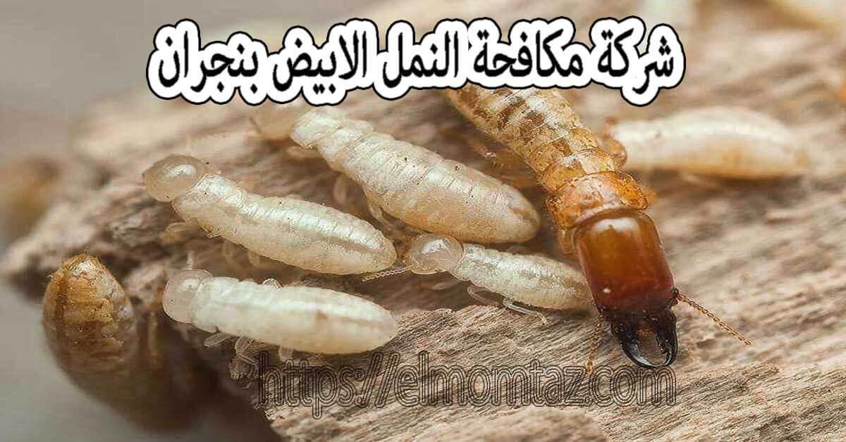 شركة مكافحة النمل الابيض بنجران