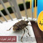 تفادي انتشار الحشرات فى بيتك مع بداية الصيف