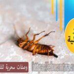 وصفات سحرية للقضاء على الصراصير